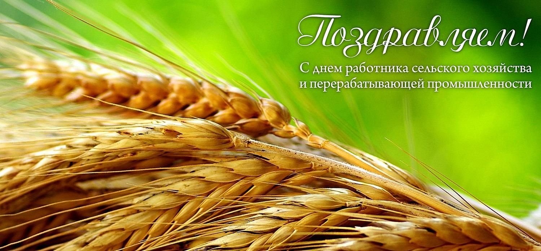 С Днем работников сельского хозяйства. Колосья