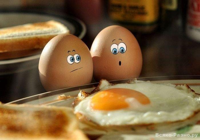 Всемирный день яйца. Яички перед яичницей
