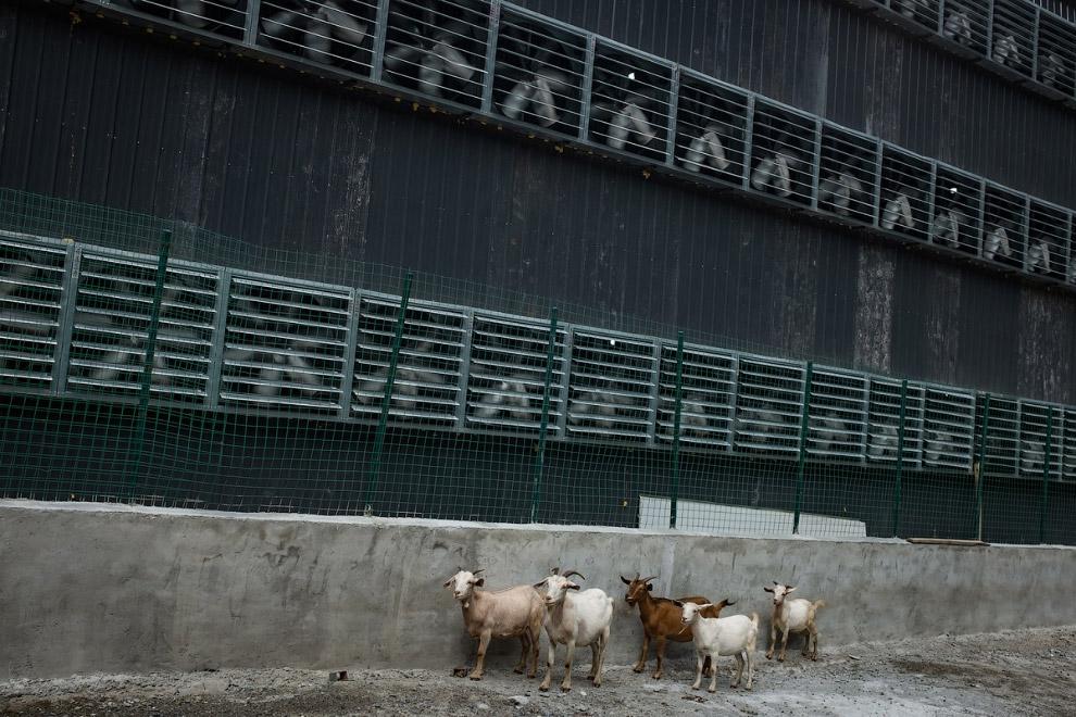 3. Одно из помещений фермы и два скучающих сотрудника. На ферме работают местные жители, живут