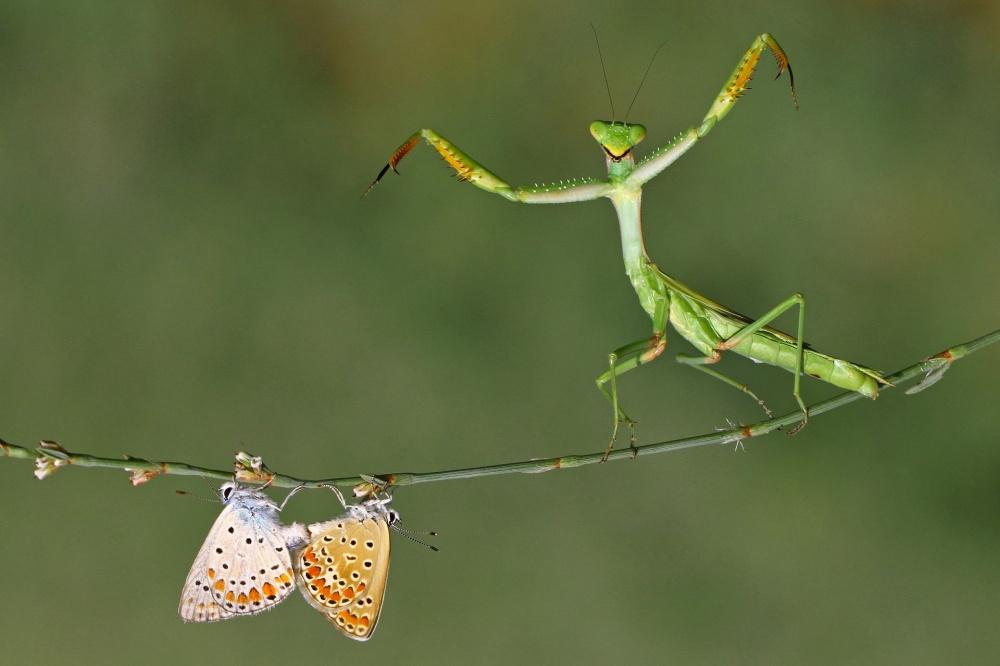 © Hasan Baglar  Номинация «Красота природы». «Насевере»