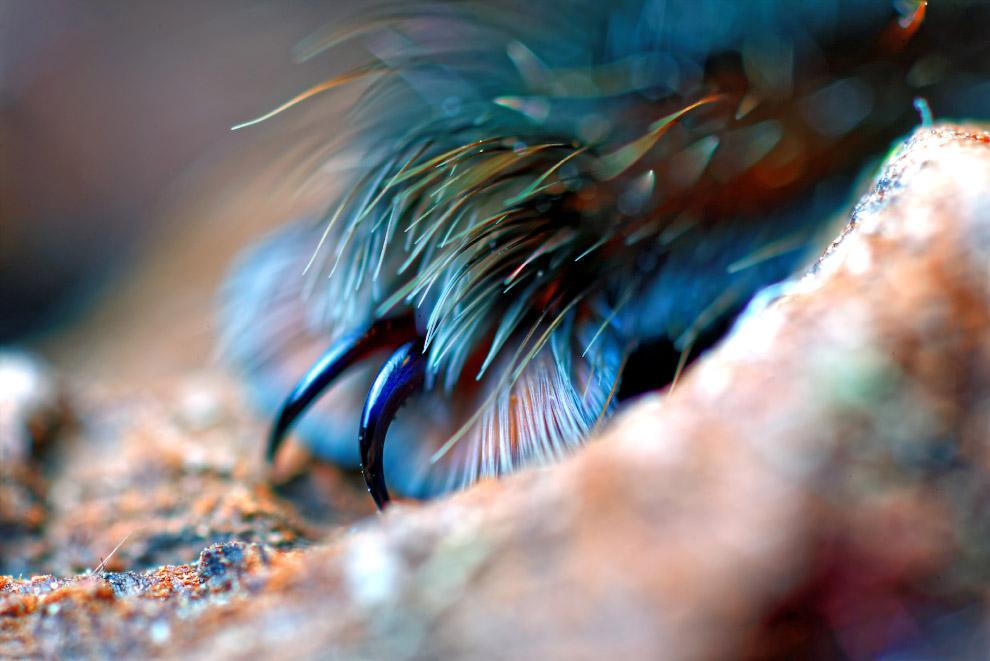 3. Пауки, как и кошки — облигатные хищники. Они питаются прежде всего насекомыми или другими мелкими