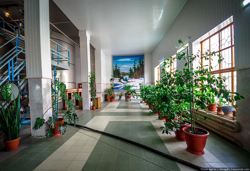 Обилие зелени, аккуратных, ухоженных цветов — непривычный вид для классического советского завода, к