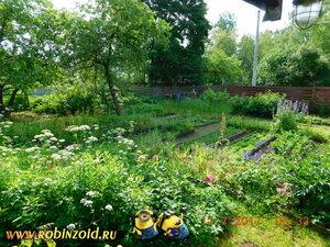 утро на огороде