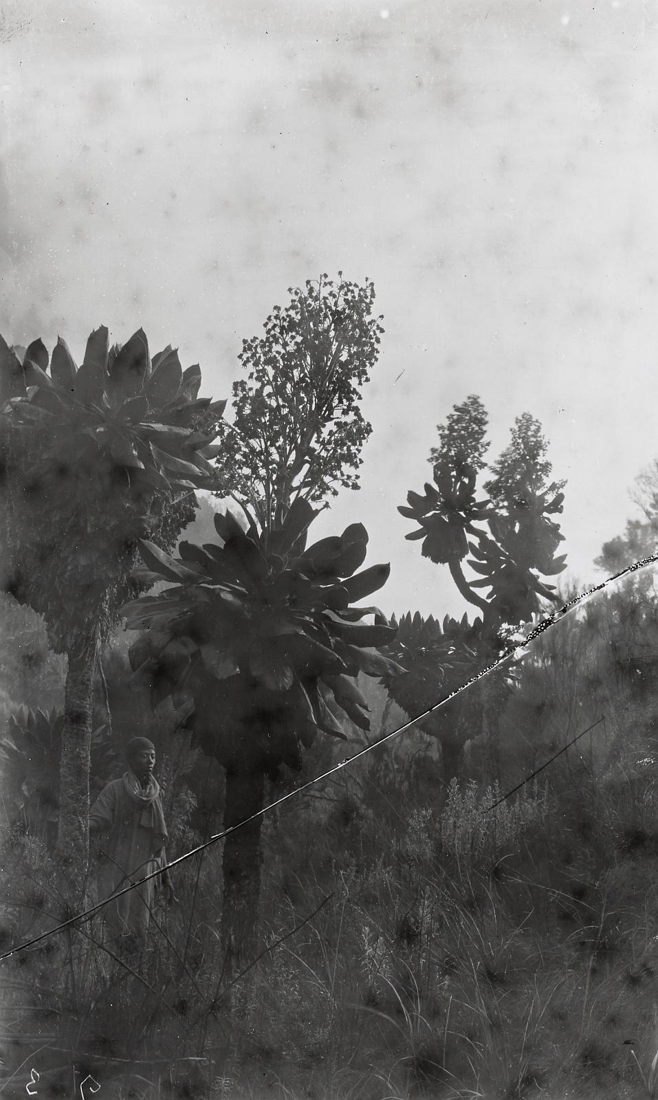 18. Килиманджаро. Представитель народности джагга