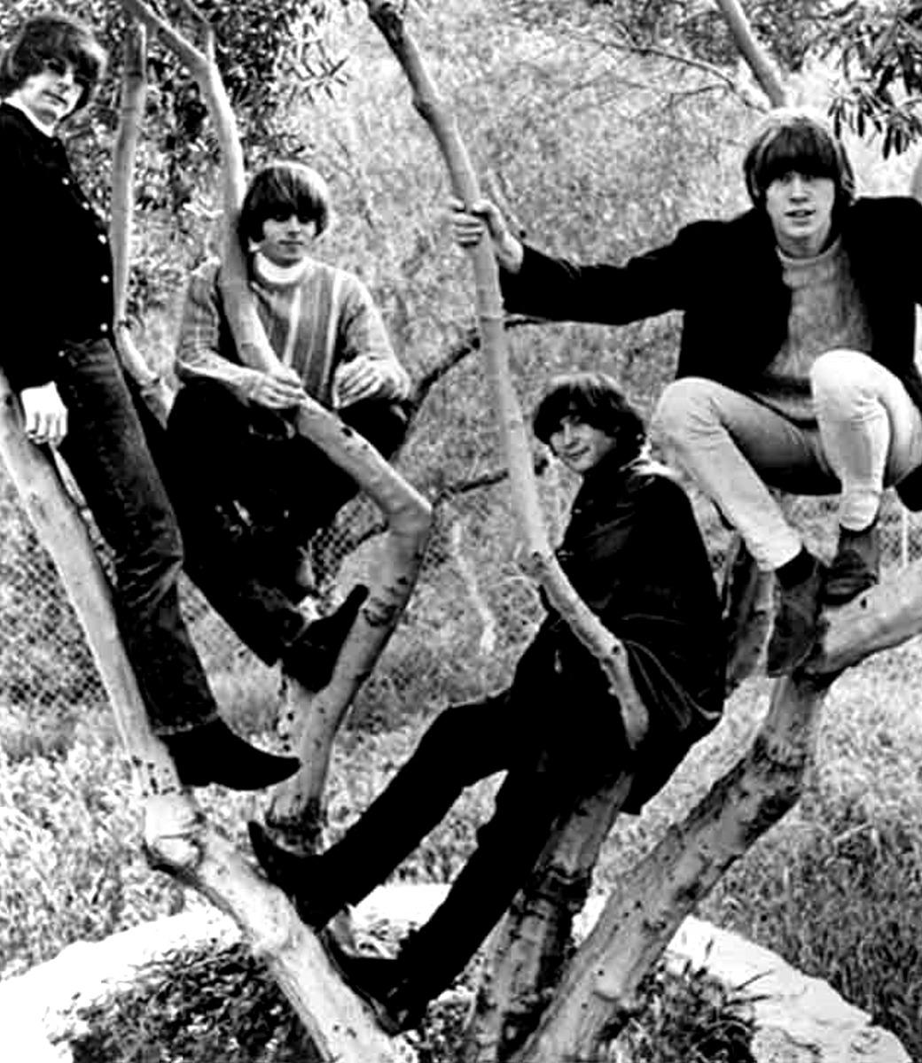 1966. «The Byrds» на дереве
