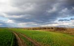 Дорога в Каменку2.png