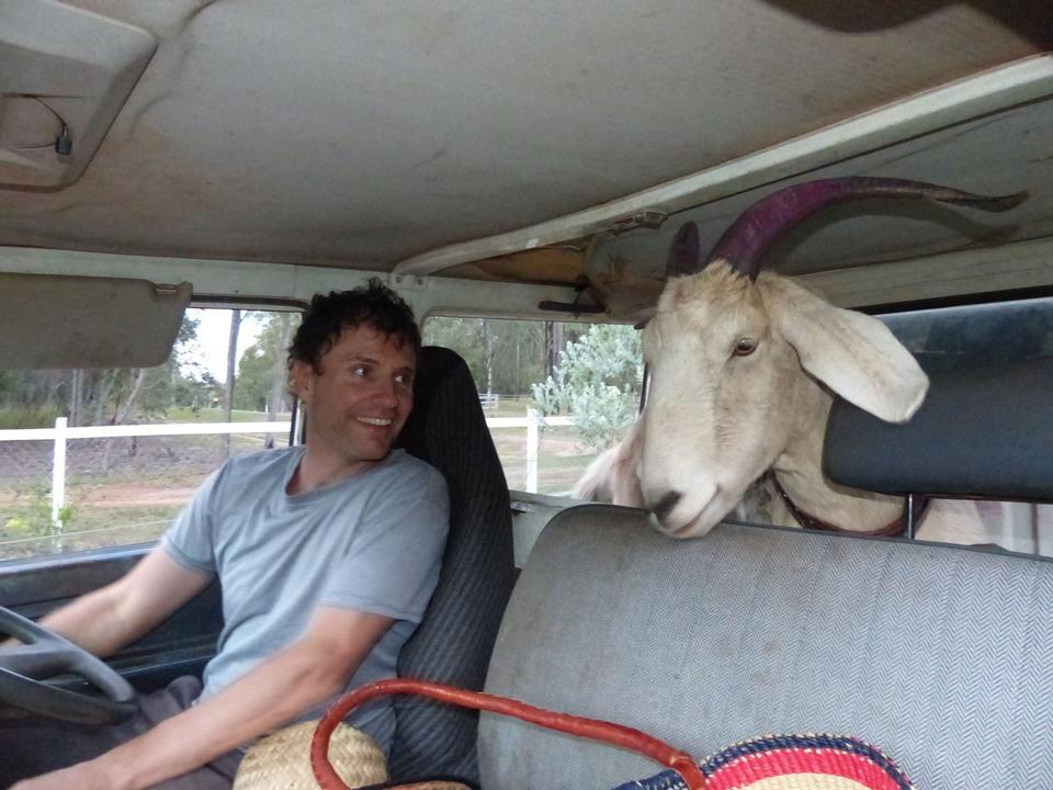 Умер самый знаменитый козёл в мире