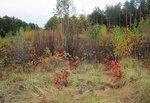 Осенняя цветовая какафония