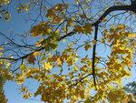 Холодные и тёплые краски осени.