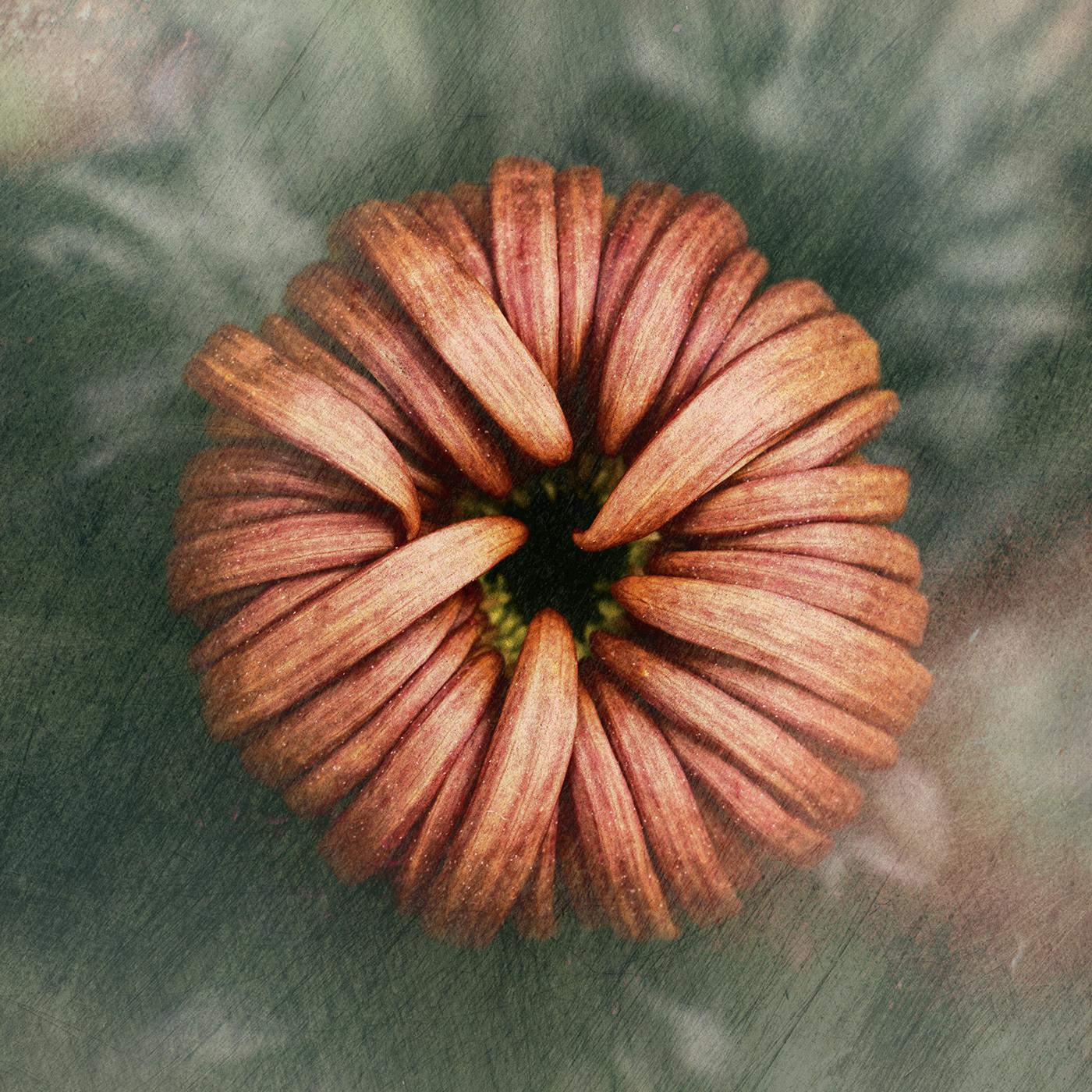 Herbst | Autumn / фотограф  Bettina Güber
