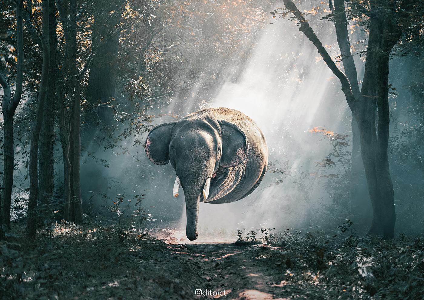 Animal Ball / работа Aditya Aryanto