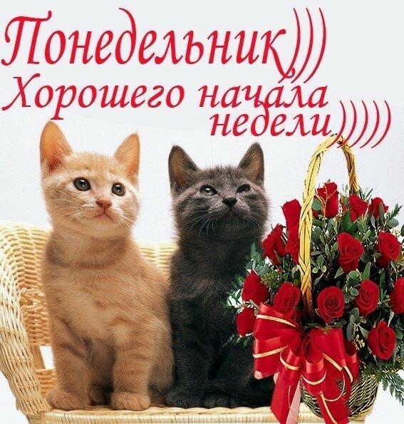 Ожидании чуда, открытка на понедельник хорошего дня