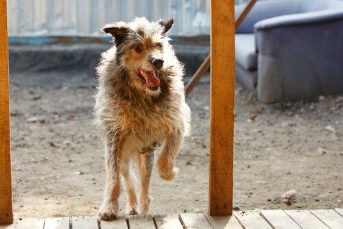 Борода собака из приюта догпорта