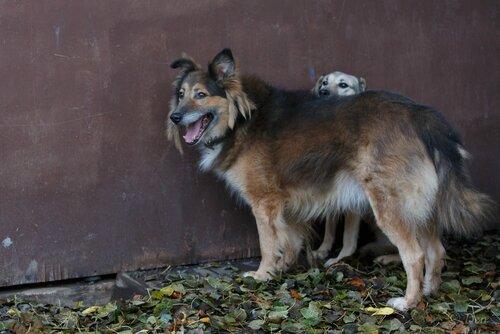 Рыжий Фокс собака в добрые руки из приюта фото