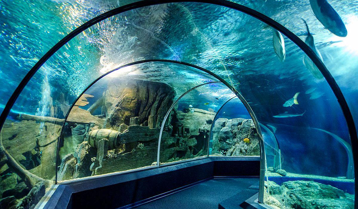 Лучшие океанариумы России, или знакомство с подводным миром (1 фото)