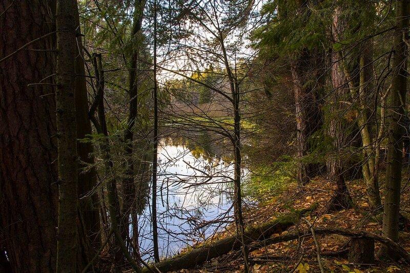 Окно в осень - лесное озеро в Заречном парке города Кирова осенью, сквозь стволы деревьев