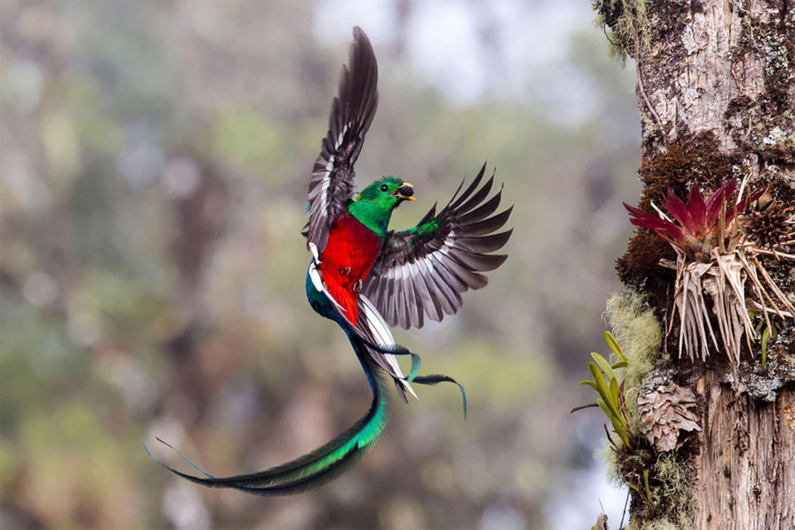 © Tyohar Kastiel / Wildlife Photographer of the Year