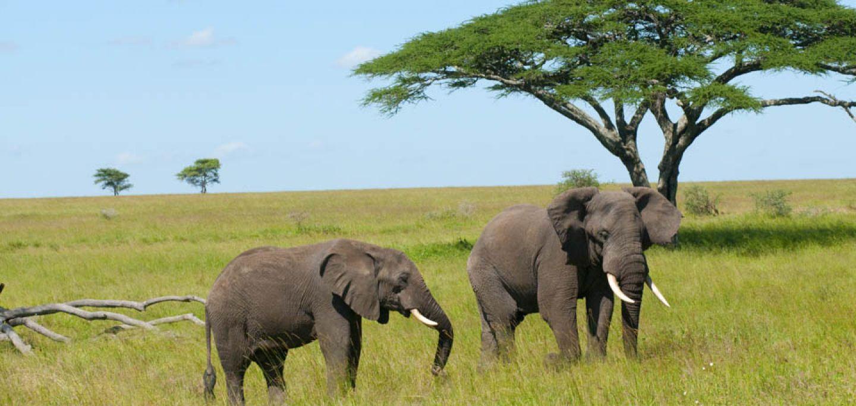 Увлекательные туры в Танзанию