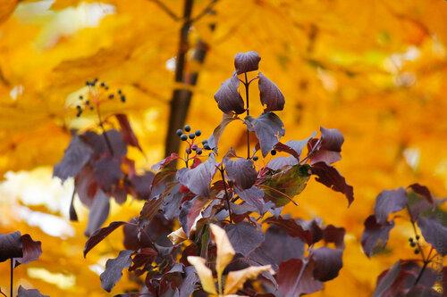 В Ботаническом саду Алматы