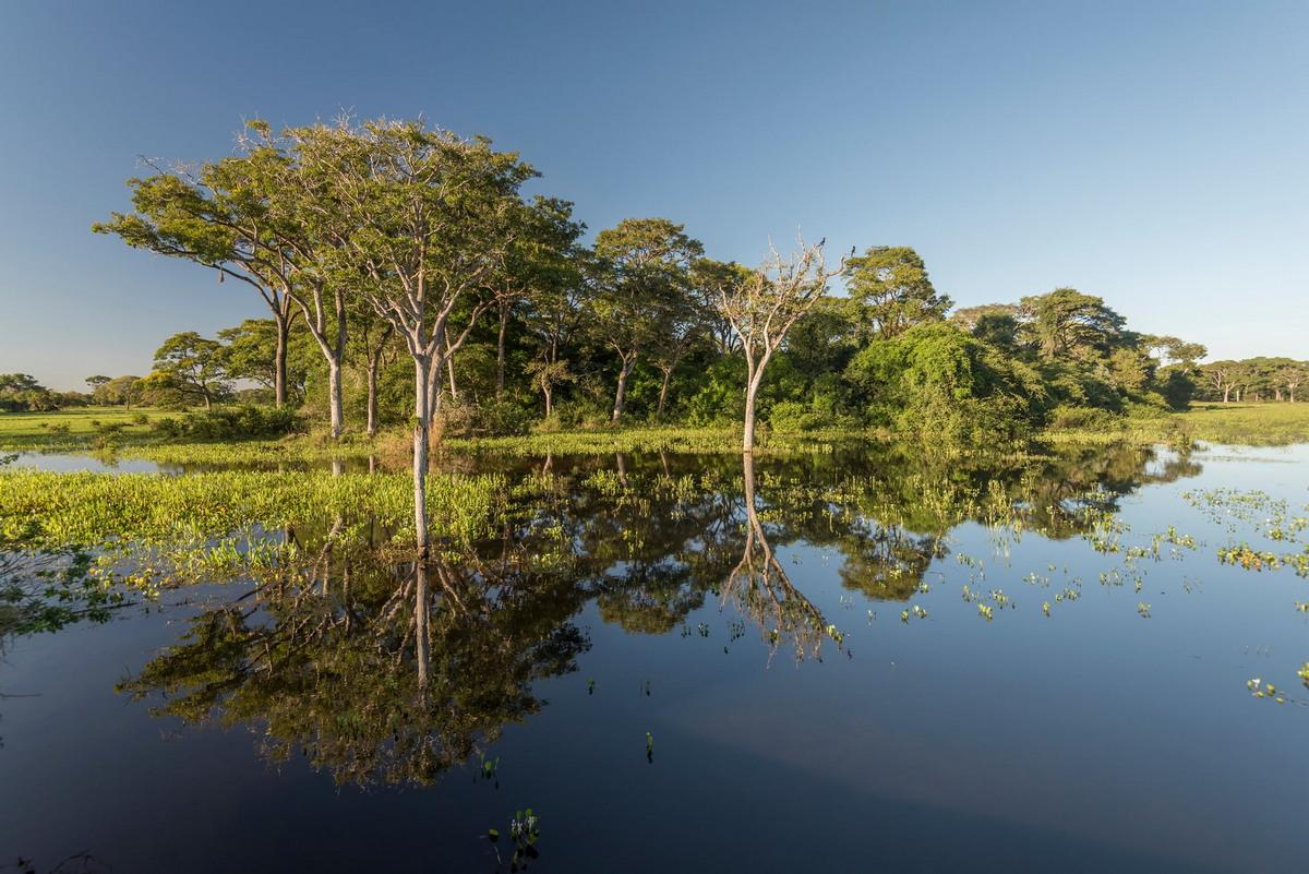Fotos do aviao da pantanal 98