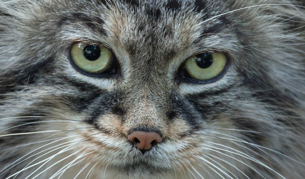 фото взгляд совершенно маленький кошки