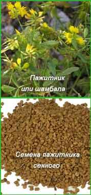 пажитник сенной