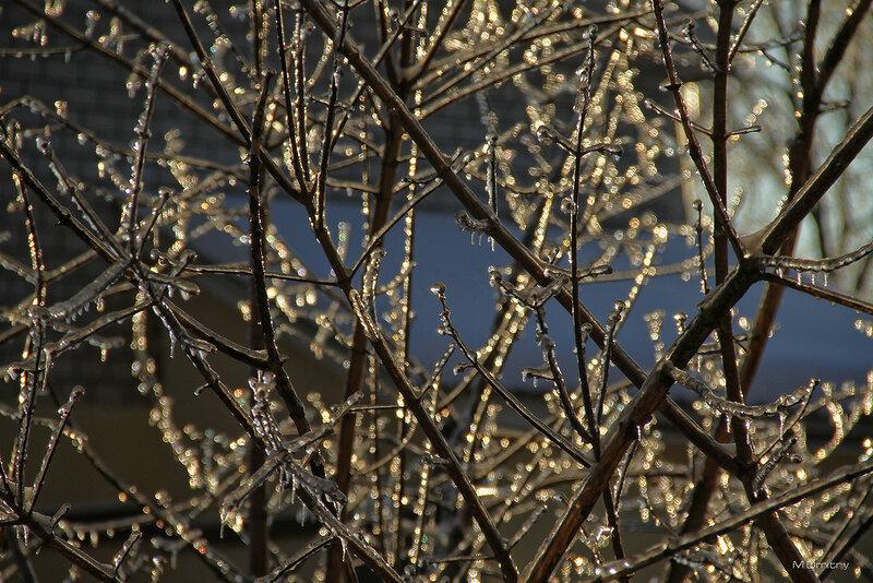 Зима (2010)