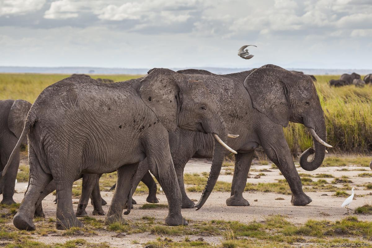 Амбосели, Кения