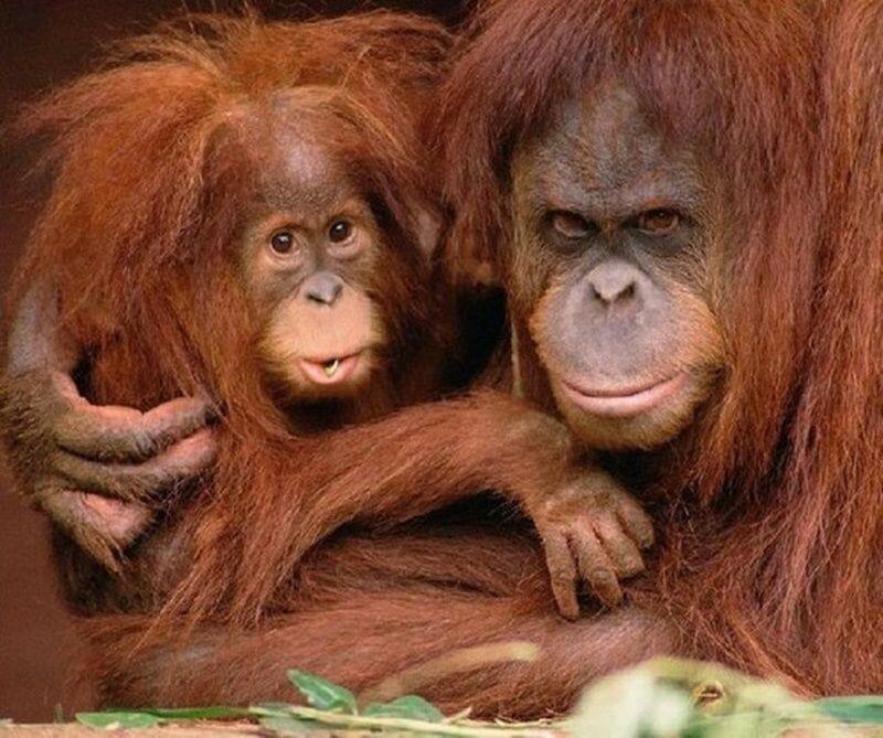 Животные, которые заставляют улыбаться (фото)