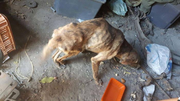 Киара влюбилась в доброго пса и отвезла его в местную организацию по спасению животных.