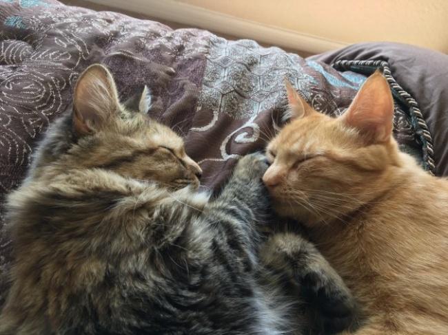 © JamesC0nquer / twitter.com  Вытолько взгляните наэти нежные, искренние кошачьи объятия!
