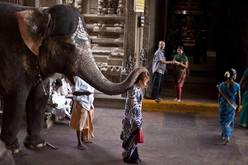 Да, это Индия, так что свами всегда готов поздороваться слон.