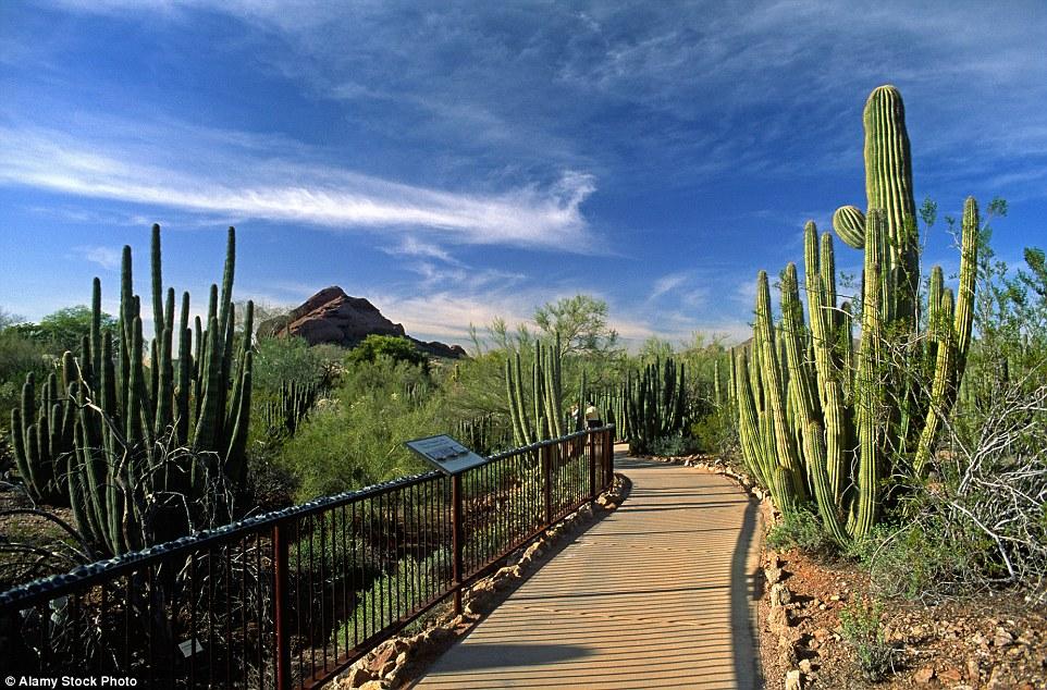 Ботанический сад был основан как площадка для изучения и сохранения различных видов растений. В саду