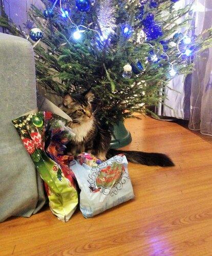 Гоша потрошит подарки.JPG