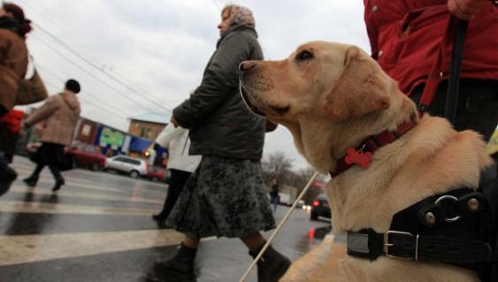 Новые правила получения компенсации наихсодержание— Собаки-поводыри