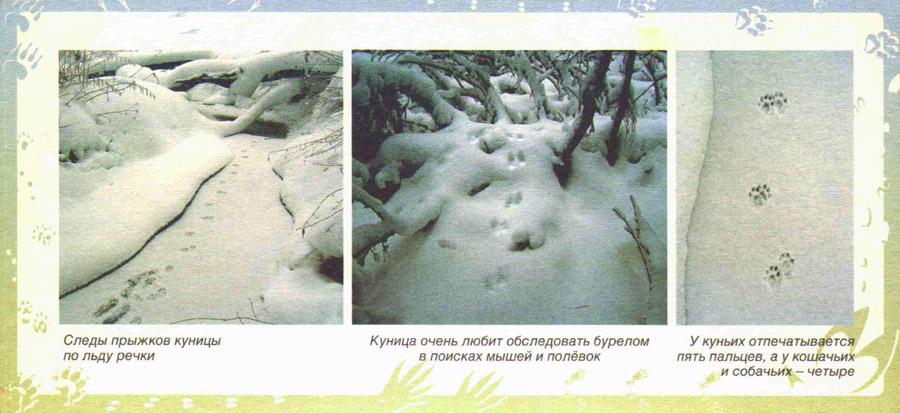 pic_11_2.jpg