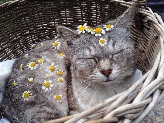 как украсить кота