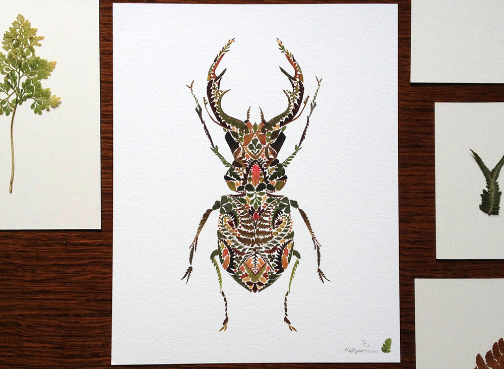 Delicate Pressed Fern Leaf Illustrations by Helen Ahpornsiri
