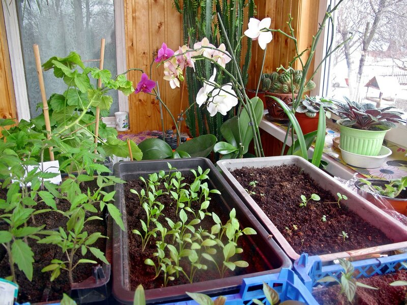 Весна в зимнем садике