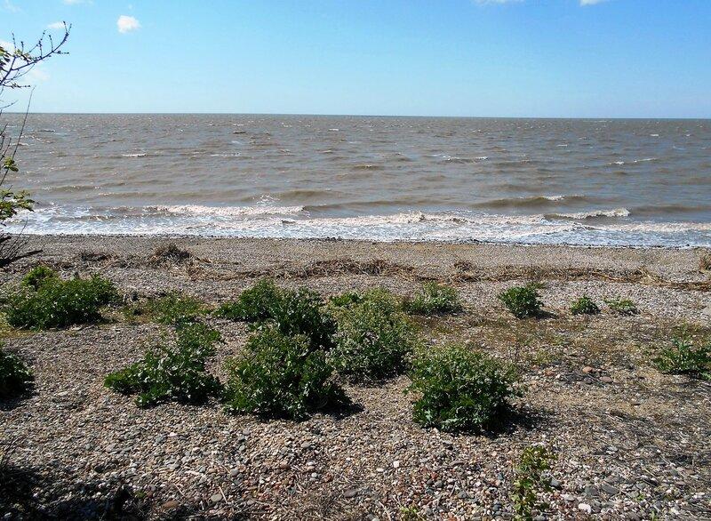 И у моря, Весны, знаки зелёные  ... DSCN5313.JPG
