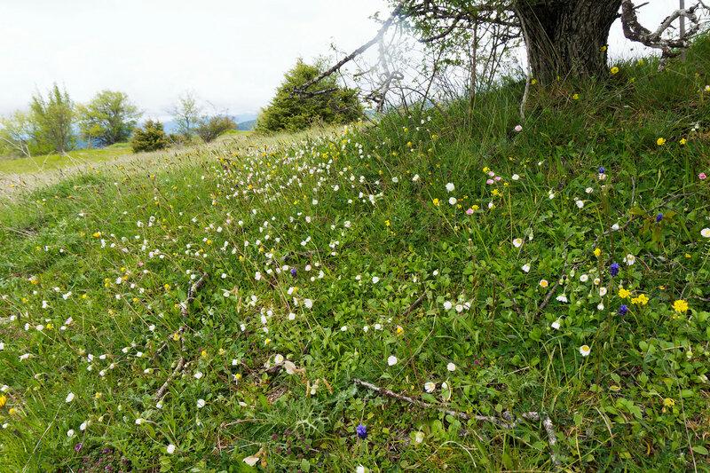 альпийские луга в цветах в горах Пинд, Греция