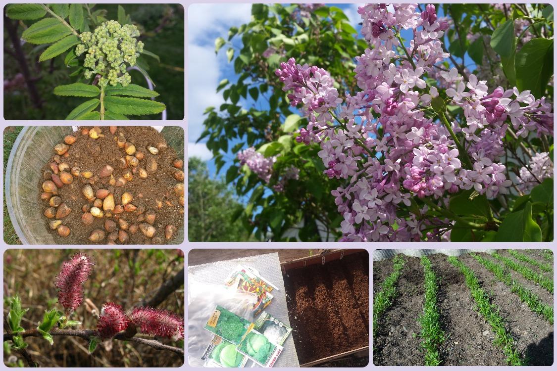 Народные приметы для дачников: что и когда сеять и сажать в огороде