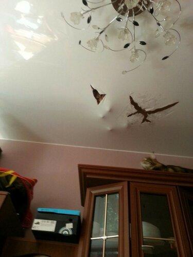 Кот и натяжной потолок-.jpg