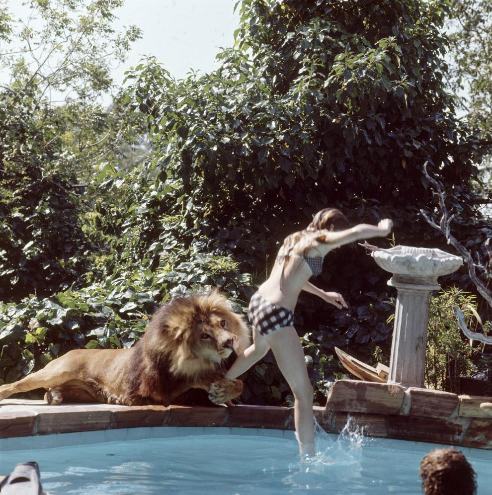 8. В постели со львом.