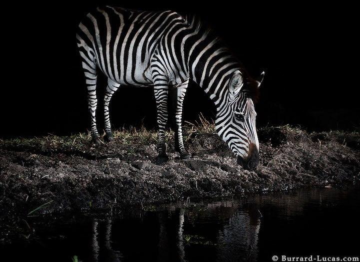 Фотографии ночной Африки. Фотограф Уилл Барред-Лукас (Will Burrad-Lucas)