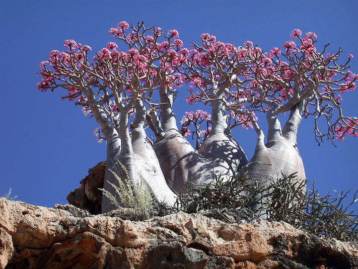 Остров Сокотра: самое «инопланетное» место на Земле