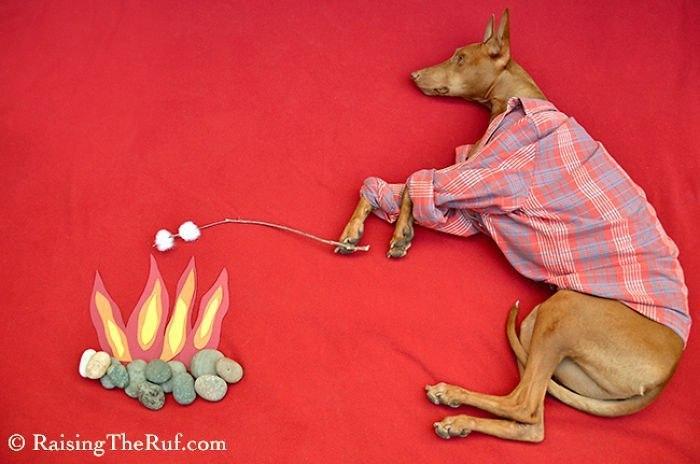Руфус - собака, которая гуляет во сне