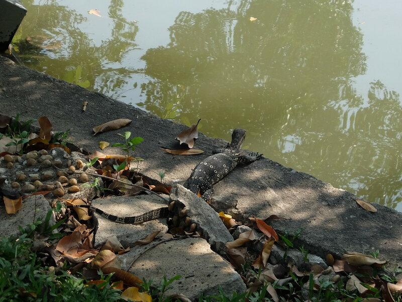 Бангкок - Варан на берегу озера