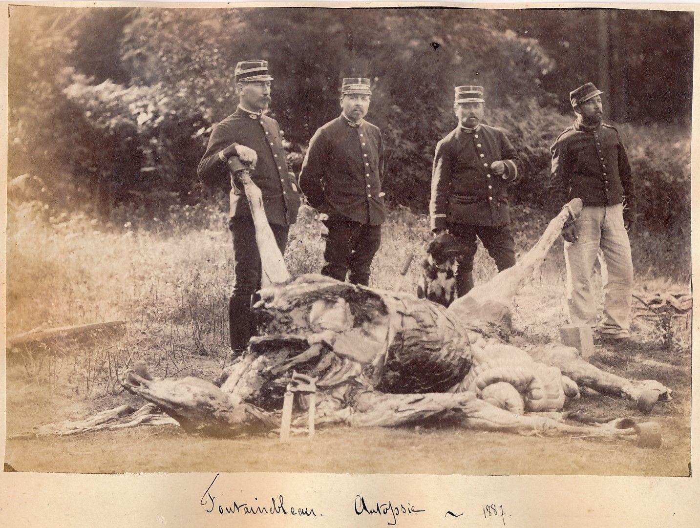 1887. Учения в Фонтенбло