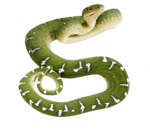 snake_PNG4048.png